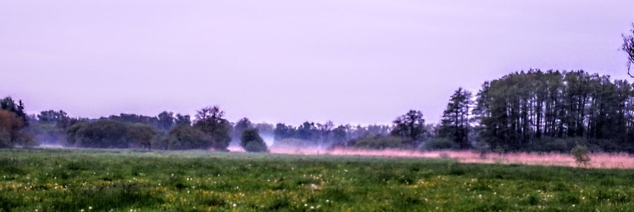 Fog is coming up...on myevening walk... Nature Tree Outdoors Beauty In Nature Foggy GetbetterwithAlex Wendland Original Picture