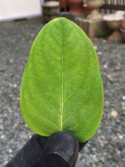 Leaf Toyohashi