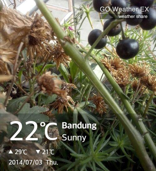 Weather Plants Bandung