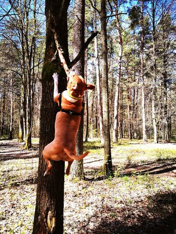 Tree One Animal Tree Trunk Day Outdoors Nature Domestic Animals Pets Animal Themes One Person Full Length Mammal Beauty In Nature Sky People Jumping Jumper 2017 EyeEm Wildlife Dog Jumping Spider Jumping Dog