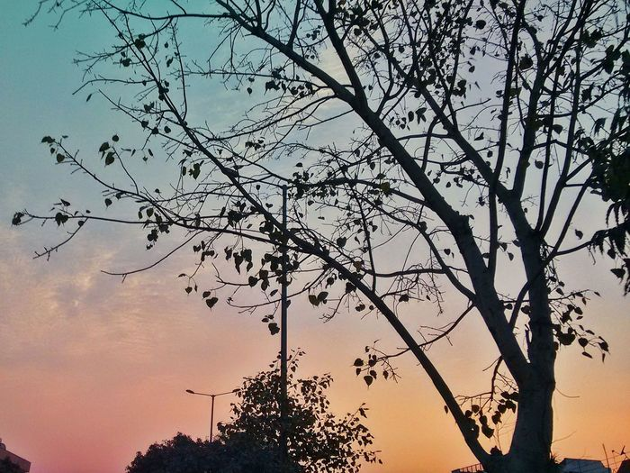 Hanging Out Sector27 Shades Of Blue Shades Of Nature TreePorn Tree Twilight Sky Shaded And Faded Relaxing Natureporn Likeforlike Follow4follow