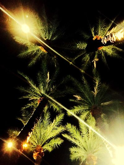 Palms from below Palm Tree Palms Night Tree Green Color Illuminated Palm Tree Christmas Nature Leaf No People Christmas Tree Outdoors Low Angle View Lowlight Lowlightphotography Low Perspective Tree