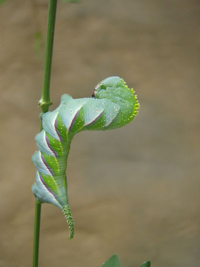 FUNNY ANIMALS Funny Insect Insects With Art 💛 Life In Costa Rica 💚 No People Caterpillar Worm Nature