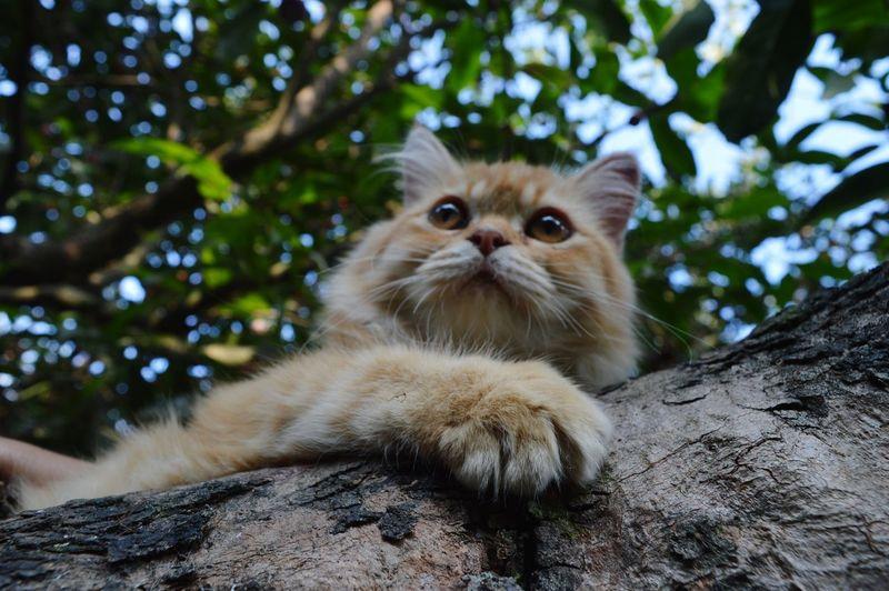 Portrait of cat on branch