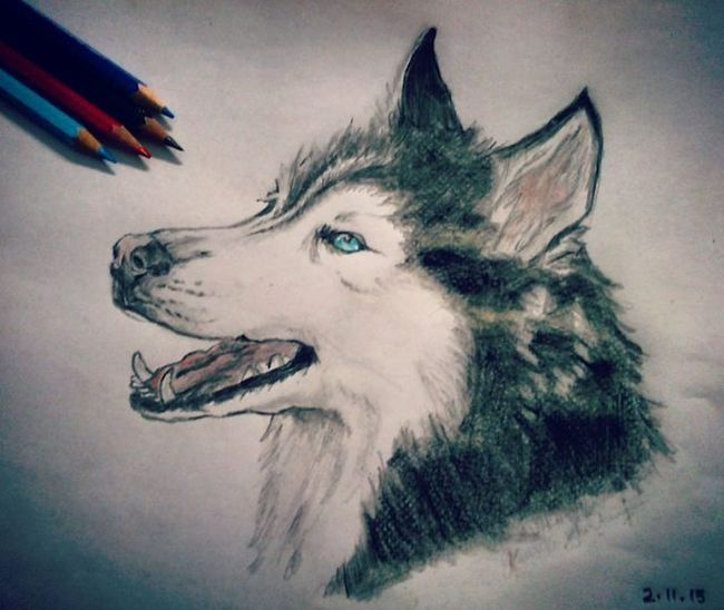 Sketching Artsanity Artstagram Gorgeous Husky Dog Doglovers Igers Igersdaily XPERIA BlueEyes Art Animal Exotic Artsy Instagram Animal Red Blue Bnw Passion Sketch Animallovers Huskiesreq Huskies artpix