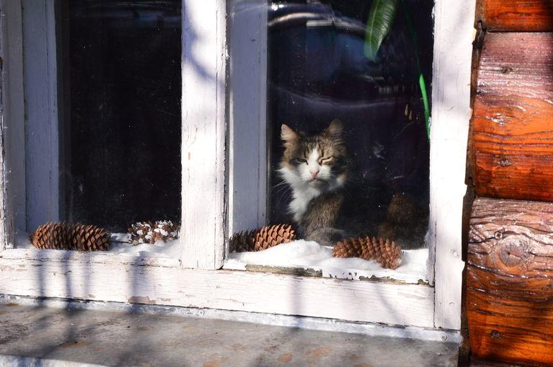 Portrait of a cat sitting on wood