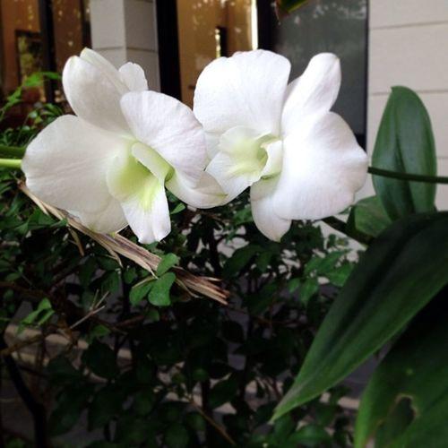 "Hello Sunday Morning :)) Whiteorchid Sweetcouple Art Tryto ""minimalism"" Natural Simplylife Morning มองให้เป็นศิลปะ ใช้ใจมองให้เกิดความสุข"