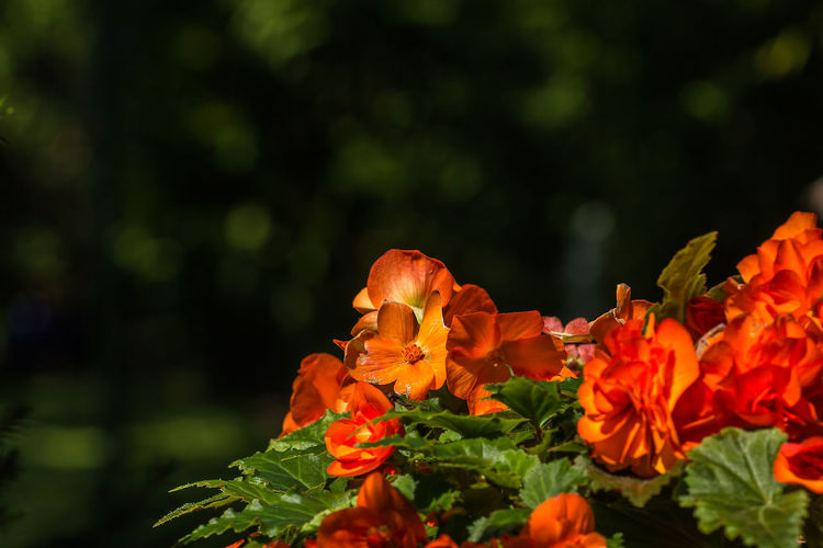 Orange Red Beauty In Nature Blooming Close-up Day Flower Flower Head Fragility Freshness Growth Nature No People Orange Color Orange Flower Outdoors Petal Plant Red Flower
