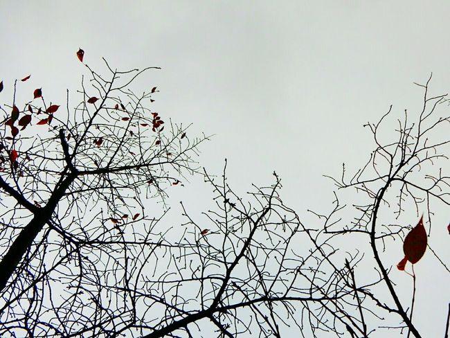 Yahikopark Rain Cloudy Autumn Capture The Moment CoolPixS9900 Lovejapan Japan Niigata-shi
