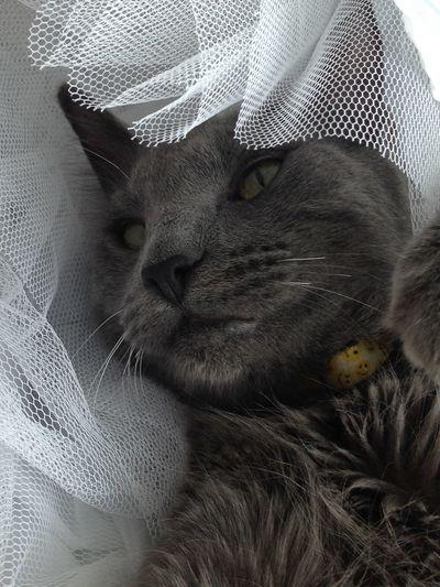 Cat cats Cat Cats Of EyeEm Catslife Cats Lovers  Catsoftheworld Feline Feline Portraits feline Feline Photography, FelineDomesticus Feline Friend