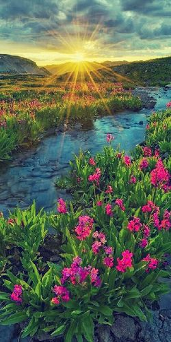 """""""Peace cannot be kept by force; it can only be achieved by understanding. """" Beautiful Flowers Beautiful Nature Relaxing Traveling"""