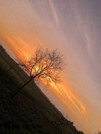 Awe Bare Tree