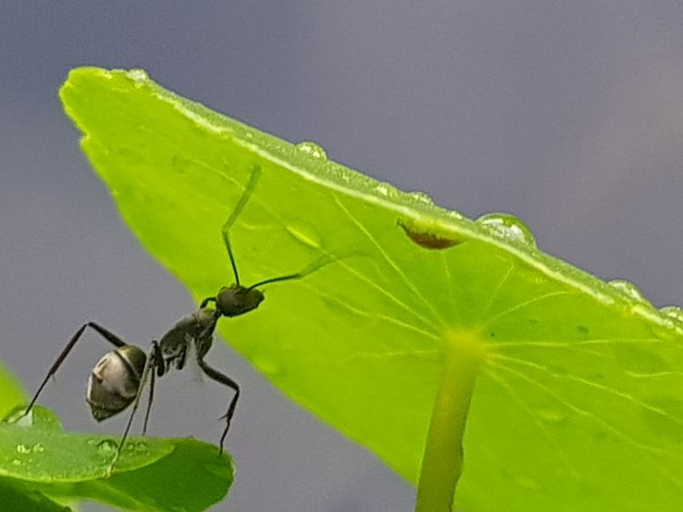 Insect Leaf Animal Wildlife Animals In The Wild Green Color One Animal Animal Themes Close-up No People Nature Day Full Length Outdoors Ants Black Ants Growth Food Agriculture Nature Freshness Pond Beauty In Nature Artichoke Green Color Close Up