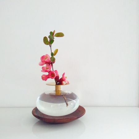 spring Pink Flower Woodwork  Bud Vase Chaenomeles Japonica Flower Head Close-up Blooming Plant Life
