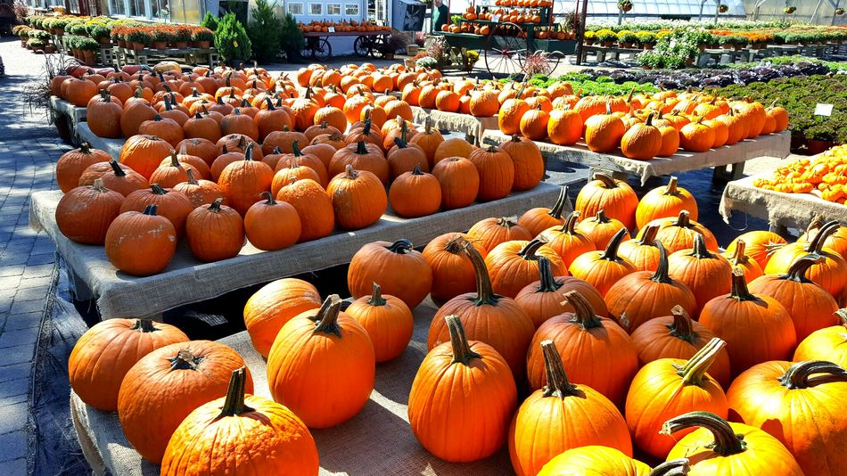 Abundance Orange Color Large Group Of Objects Pumpkin Outdoors Nature Freshness Freshness Abundance Orange Color Fruit Food Healthy Eating Orange - Fruit Large Group Of Objects Food And Drink No People Outdoors Pumpkin Photo Of The Day Colors Of Autumn Farmstand Passionforphotography