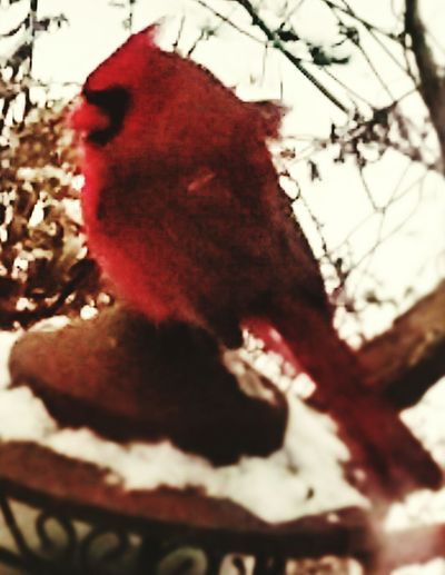 Close-up of red bird