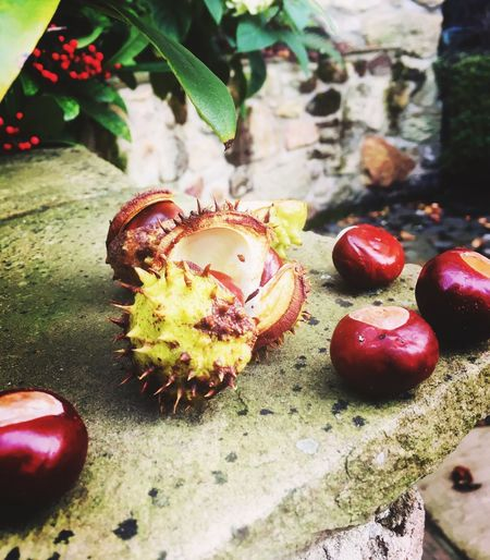 To Autumn Autumn Conkers Chestnuts Close-up Fruit No People Nature