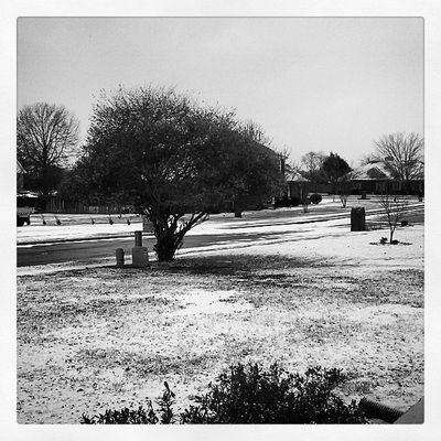 Snowday Blackandwhitephotography Huntsvillealabama Lgtribute