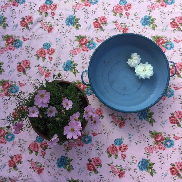 Flowering In Bloom Garden Photography InTheGarden Backyard Pottery Mybackyard Bloementuin