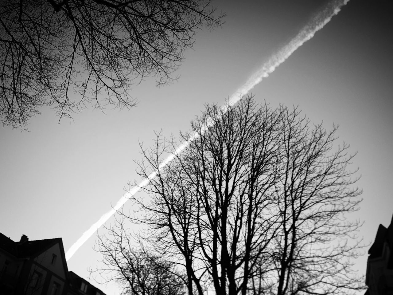 bare tree, tree, branch, vapor trail, built structure, building exterior, low angle view, architecture, contrail, sky, outdoors, nature, day, no people, beauty in nature, clear sky