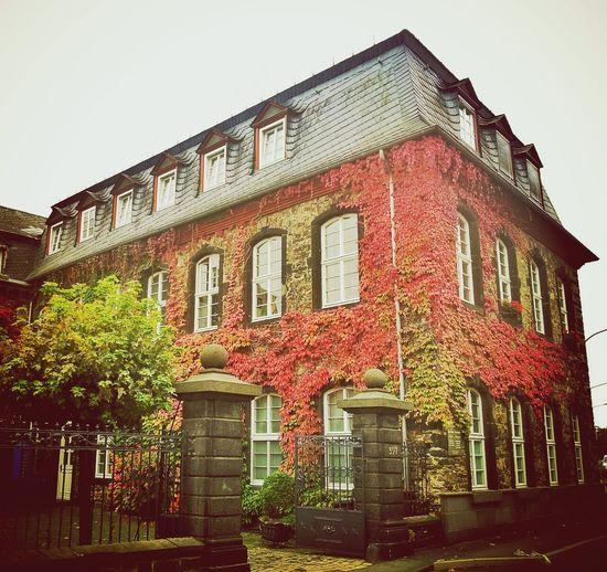 Clara Filter EyeEm Best Shots - Autumn / Fall Koblenz