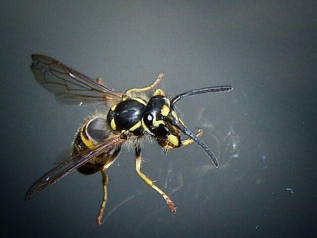 Sl1000 Eye4photography  EyeEm Best Shots Insekt Wespe