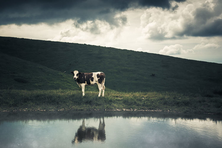Looking At Camera Solitary Water Reflections Animal Themes Caw Countryside Mountain No People Portrait The Week On EyeEm
