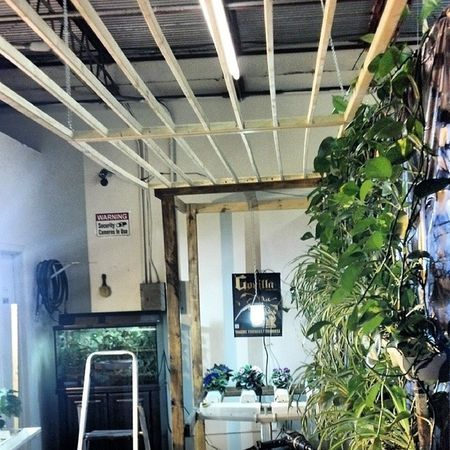 Gonna intertwine the ivy in the slats. Forgot to stain them first. Lol!!! Hydroponics Hydroculture Plants Gardening