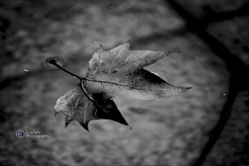 Autumn is coming to Madrid. Black And White Eye For Details Autumn Leaves EyeEm Nature Lover