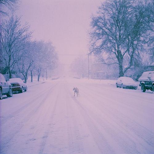 Violet By Motorola Snow ❄ Winter Wintertime Nostalgia Puppy Film Labrador Winter Wonderland Winter Trees