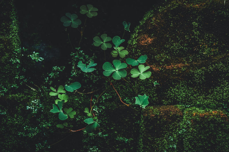 Plants growing in pond