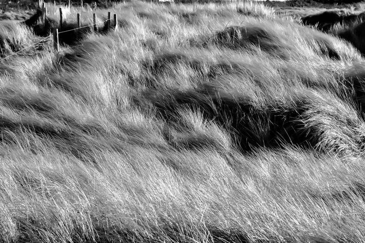 Dune Brittany Dunes France Nature Nature Photography Beauty In Nature Bnw Bnw_captures Bnw_collection Day Dune Field Grass Growth Land Le Conquet Nature Nature_collection No People Outdoors Plant Tranquility