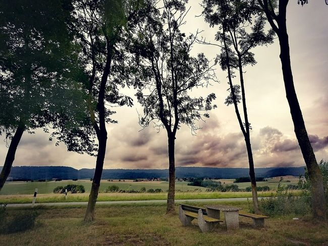 Absence Bare Tree Beauty In Nature Bench Cloud - Sky Day Empty EyeEm Nature Lover Field Grass Grassy Green Color Growth Idyllic Landscape Nature Non-urban Scene Outdoors Park Bench Scenics Sky Tranquil Scene Tranquility Tree Tree Trunk
