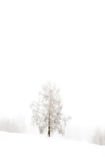 A tree with snow in a foggy day Beauty In Nature Cold Temperature Covering Fog Foggy Foggy Day Foggy Morning Idyllic Landscape No People Non-urban Scene Scenics Season  Snow Snow Covered Snow ❄ Tranquil Scene Tranquility Tree Tree Trees Weather Winter Winter