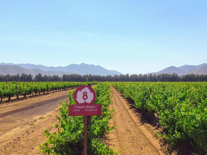 Chenin Blanc Vineyards in Ensenada, Baja California Wine country. Sign Wine Sign Enotourism Baja California Vineyards  Soil Winemaking Rural Scene Agriculture Communication Clear Sky Field Text Mountain Sky Vineyard Winery Vine Vine - Plant Cultivated Land Information Sign Farmland Countryside