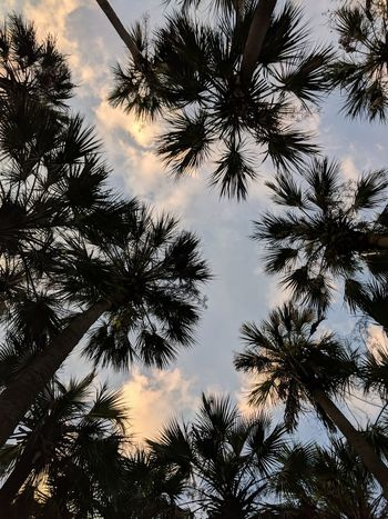 Palm Tree Contrast Florida Park Tree Low Angle View Sky Nature Silhouette Forest