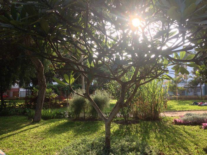 Jardín botánico de Trujillo-Perú Garden