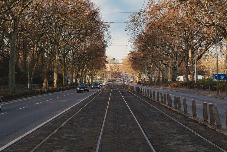 Railroad tracks amidst bare trees in city