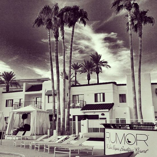 Lounging in Las Vegas Lasvegas Rumorboutiquehotel DesertSky Palmtrees