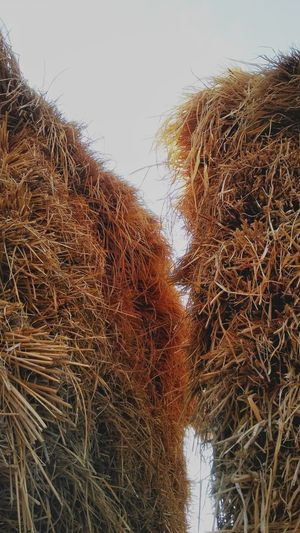 Low angle view of hay bales against clear sky