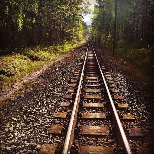 Roland rügen Railroad Track Transportation Tree Forest Rail Transportation Landscape The Way Forward Tranquil Scene Diminishing Perspective Non-urban Scene Straight Vanishing Point Tranquility Nature Outdoors Scenics Day Growth Countryside Surface Level