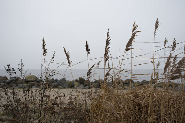 Nature Outdoors No People Plant Grass Landscape Day Sky Beachphotography Beach Life Stones & Water Stones Seascape Photography Season  Seaside Fullframe NikonD60 Nikonphotography Nightphotography Seascape Sea And Sky Sea Sunset Water