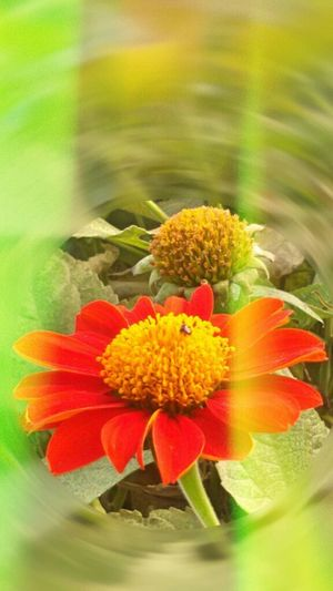 Red Flower, Redial Blur, flowersporn, flower _ collection, Getting In Spired. .