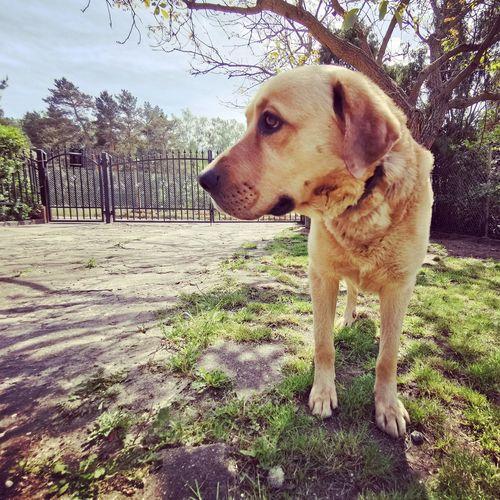 Pets Dog Beagle Sky Close-up Canine Dog Lead