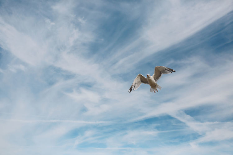 Animal Behavior Animal Themes Animals In The Wild Avian Bird Blue Cloud Cloud - Sky Day Flight Flying Freedom Low Angle View Mid-air Nature No People One Animal Outdoors Seagull SEAGULL IN FLIGHT Seagulls Sky Spread Wings Wildlife Zoology #FREIHEITBERLIN