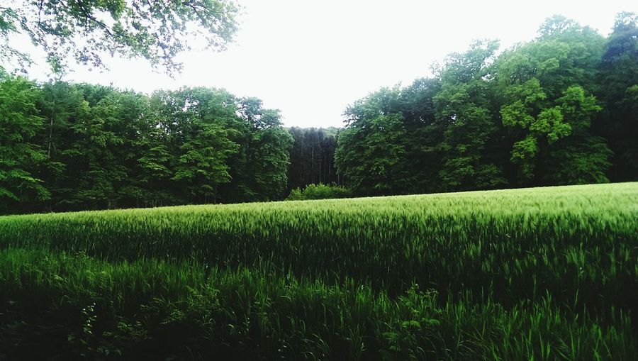 Nature , green, forest, field, peace , relaxing Walking Around