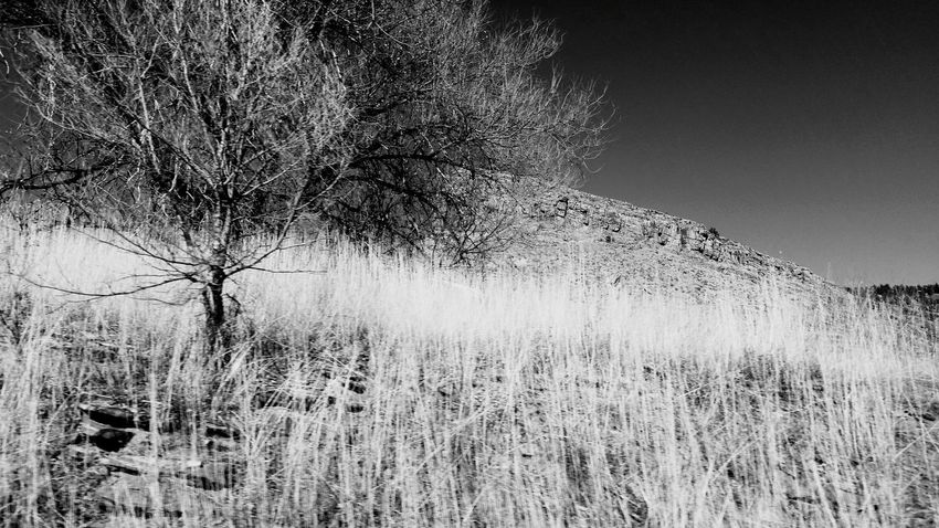 (Black&white version) Tree Growth Sky Nature Day No People Outdoors Clear Sky TranquilityTranquilityBlackandwhite Photography Clear Sky Beauty In Nature Colorado Grass Landscape Scenics Great View Taking Photos Enjoying Life Mountain