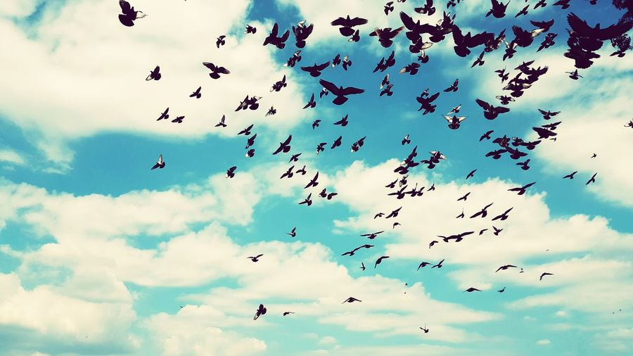 Flock of birds on the sky. - Flying Flock Of Birds Bird Animal Themes Cloud - Sky Nature Day Outdoors Sky Animal Wildlife Blue Freedom Explore Independence Group Imagination Together Mass Collective Hysteria Wild Animal