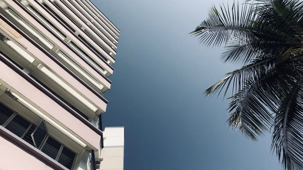 EyeEm Selects Architecture Building Exterior Built Structure Low Angle View Palm Tree Clear Sky No People Skyscraper Outdoors City Sky Tall Blue Tree Day Modern Growth