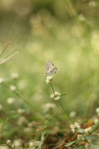 Butterfly - Insect Nature Beauty In Nature Beautiful Art Macro Morning Light View Painting Springtime Flower Perching Spread Wings Butterfly - Insect Insect Uncultivated Conformity Close-up Animal Themes Plant Animal Wing Wildflower Animal Antenna Butterfly Dandelion Pollination